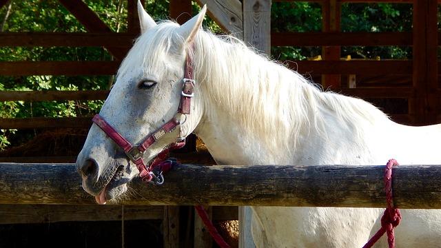 horse-1542961_640